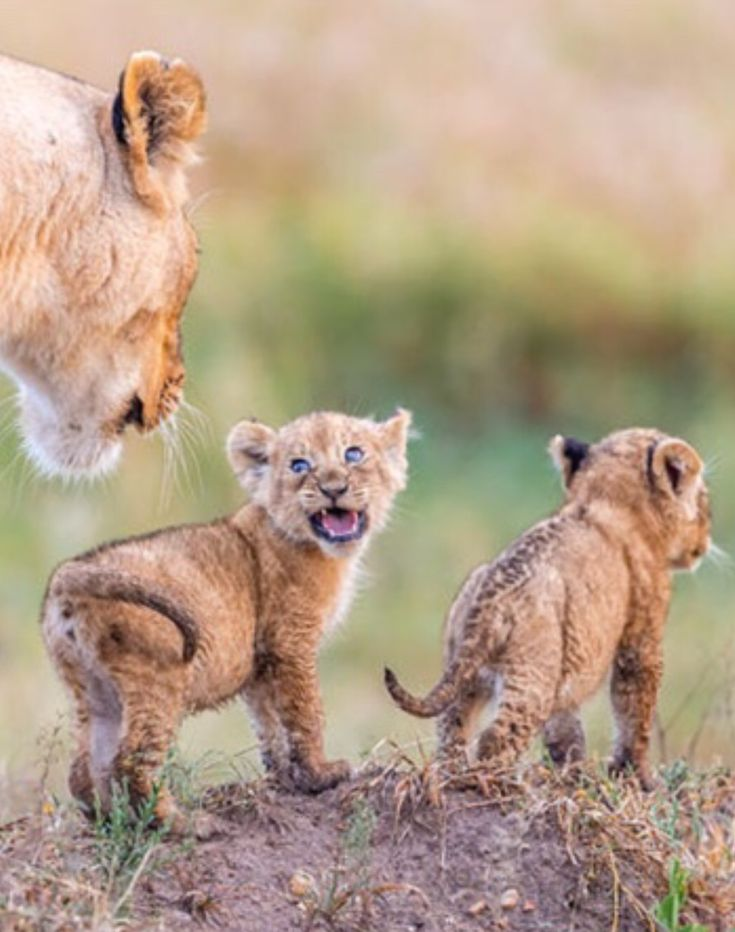 """""""STOP! Mom, that's sooo embarrassing! I'm already big and can go there alone. Ok.?"""