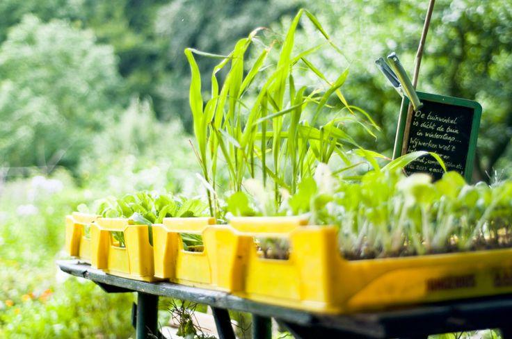 We kiezen voor een mix van zaden zaaien, plantjes opkweken in de vensterbank en dan planten. Maar als dat het allemaal niet doet kunnen we ze altijd nog los kopen :-)
