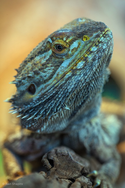 Making friends with Dragons by alan shapiro photography, via Flickr