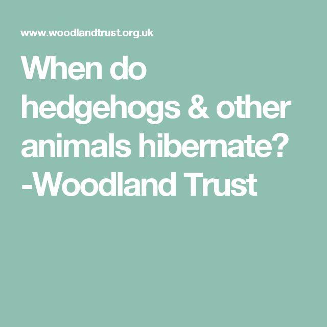 When do hedgehogs & other animals hibernate? -Woodland Trust