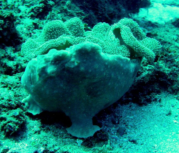 Frog Fish Sodwana Bag