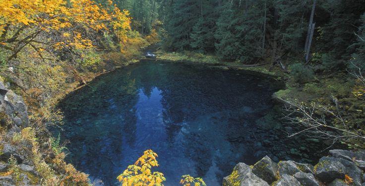 Best 25 Tamolitch Pool Ideas On Pinterest 3 Pools Oregon Blue Pool Oregon And Blue River Oregon