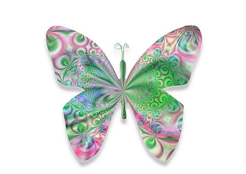 butterfly323   Flickr - Photo Sharing!