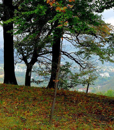 Normafa. A Pilisi Parkerdő és a Duna-Ipoly Nemzeti Park fennhatósága alá tartozó terület korábban nem véletlenül volt annyi író, költő és művész kedvelt kirándulóhelye: a változatos tájak, a csendes erdei ösvények, a festői kilátás, valamint a pihenésre és piknikre alkalmat adó tisztások segítenek elszakadni a zajos és monoton hétköznapoktól, illetve gondoskodnak a tökéletes feltöltődésről.