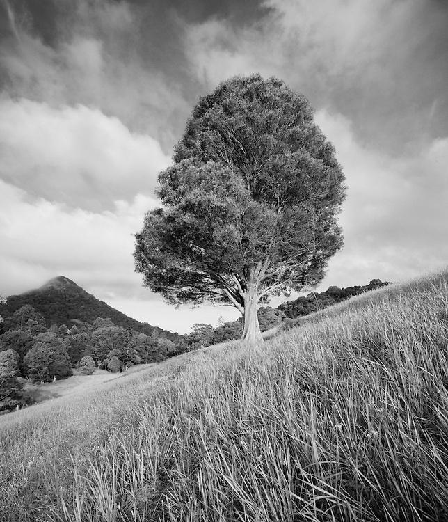 Cooroy Hillside B | Neil Paskin Photography