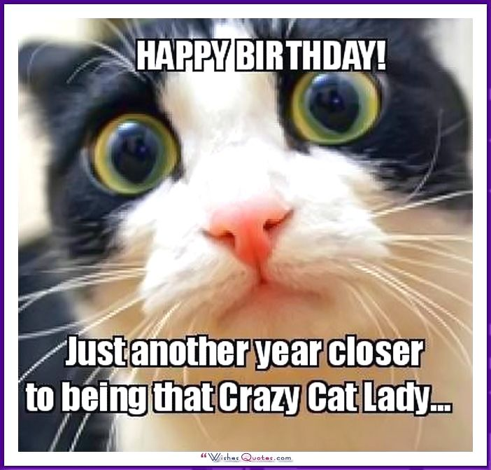 Birthday Meme with a Cat: Another year closer to being that crazy cat lady...