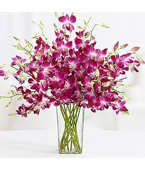 Valentine's Day Purple Dendrobium Orchids - Flowers - http://flowersnhoney.com/valentines-day-purple-dendrobium-orchids-flowers/