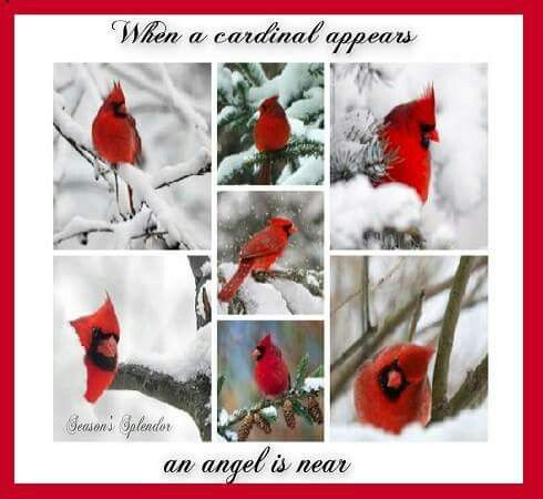 When A Cardinal Appears An Angel Is Near
