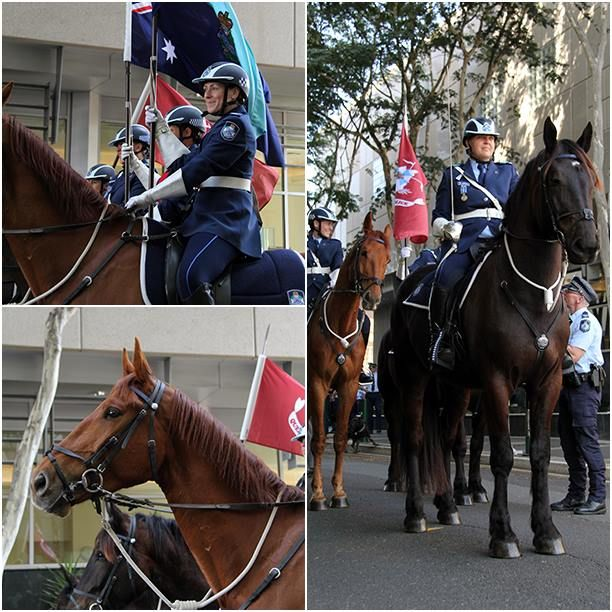The Queensland Police Mounted Unit preparing to lead the National Police Remembrance Day - March