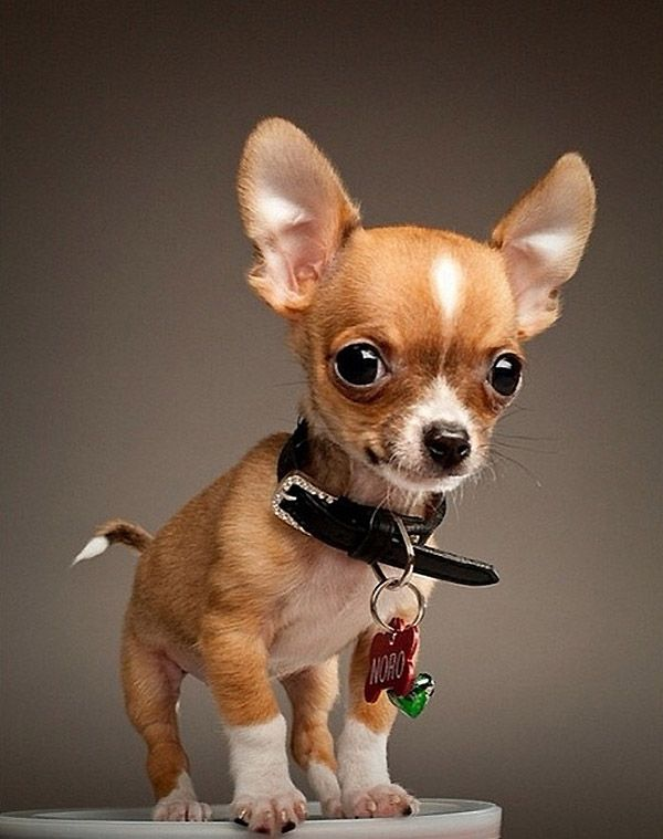 Perros peligrosos: XXXIV.