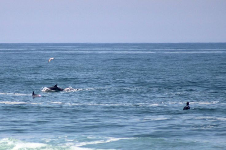 Arda Beach. Summer surf with dolphins
