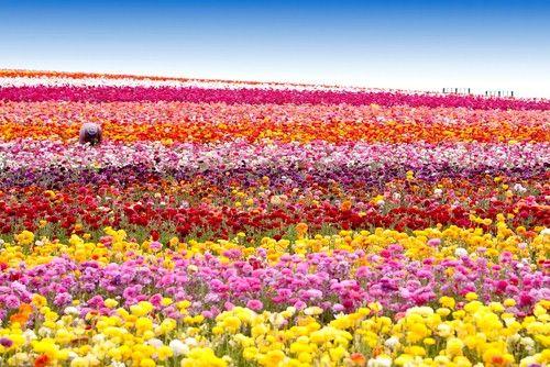 flower bloom - Google Search