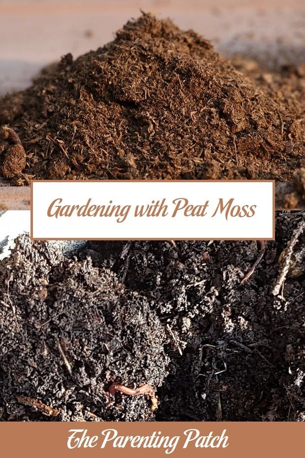Gardening With Peat Moss Peat Moss Growing Grass Soil Additives