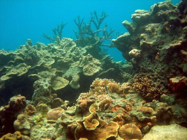 INDONESIA : Karimunjawa Coral Reef
