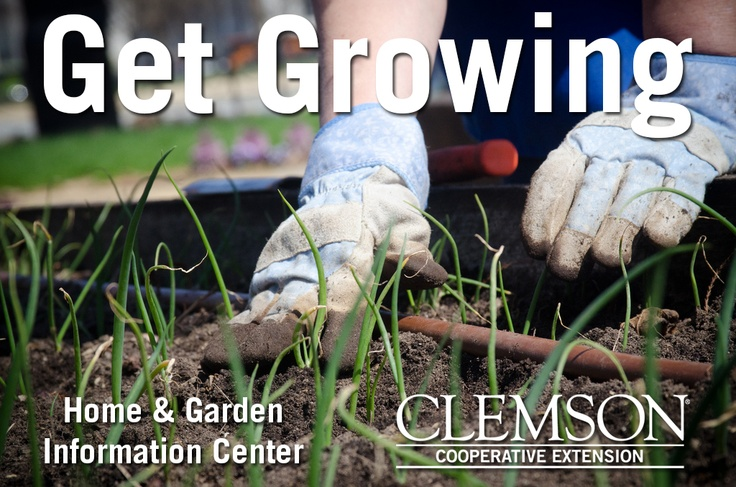 Let Clemson's Home & Garden Information Center help you get growing. http://www.clemson.edu/extension/hgic/ Photo Credit: USDA via Flickr