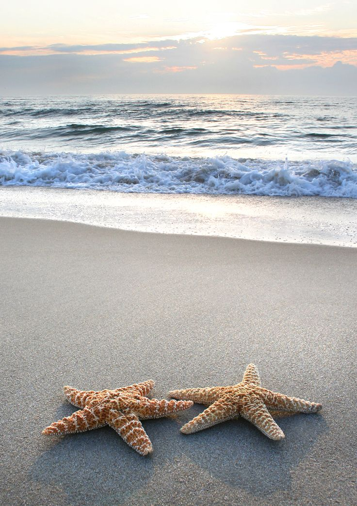 ~Starfish~  Every life form seems to reach out to its own kind in order to- not just survive- but to flourish.