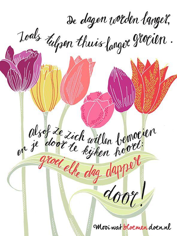Bloembureau Holland - Anthology tulip - by Studio Het Paradijs