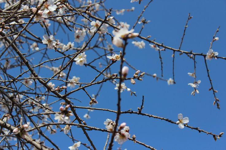 #Spring in #Apulia.