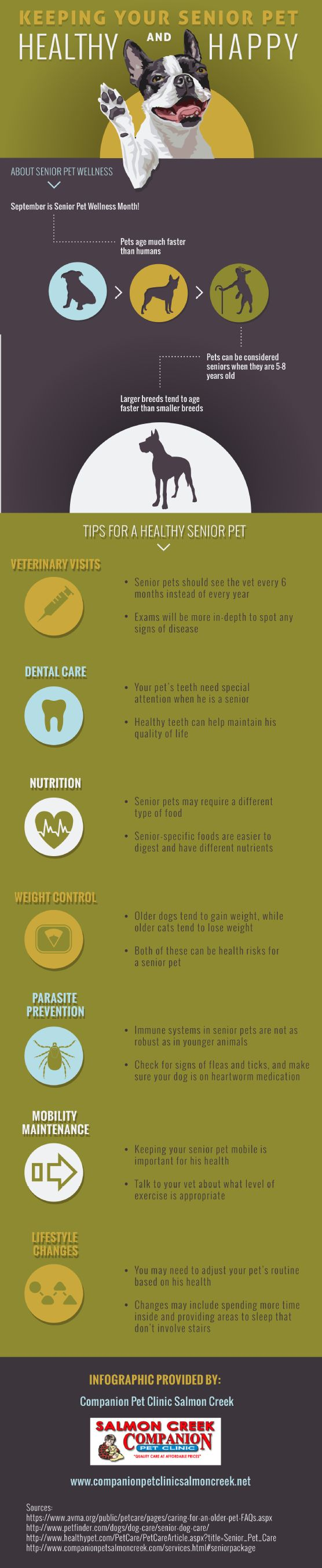 Senior pets should see the vet every 6 months instead of every year so the vet can spot early signs of disease. This infographic from a veterinarian in Vancouver, Washington offers more tips for caring for a senior pet.