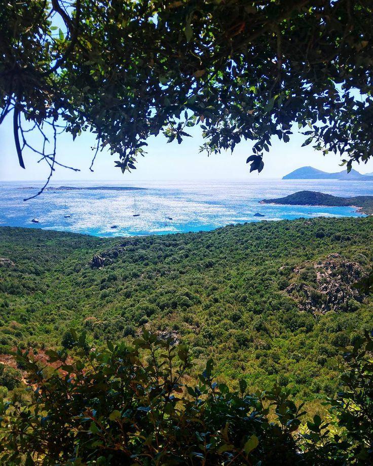 Like a trip in the Amazonian Forest . . . #costasmeralda #golfoaranci #sardegnagram #sardegna_super_pics #lanuovasardegna #focussardegna #yallerssardegna #sardegnaofficial #volgosardegna #sardiniaworld #sardinialand #sardegna #sardinia #portorotondo #portocervo #finditliveit #vscophile #livelevel #thecreatorclass #visualofearth #heatercentral #darlingescapes #guardiantravelsnaps #cbview #livelevel #iamatraveler #timeoutsociety #bestdiscovery #love