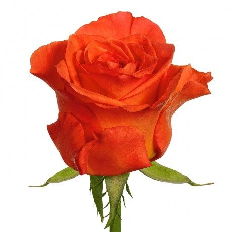15 best images about Orange rose ideas on Pinterest ...