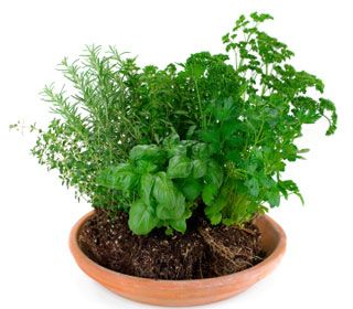 Your One-Pot Herb Garden  Growing herbs is one of the easiest ways to get started with a backyard (or balcony) garden. Here are four you can grow in just a single pot.