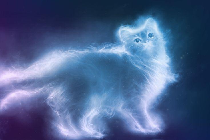 Come sostenevano gli Egizi, il gatto sembravedere gli spiriti dei morti e… molto altro. Chiunque abbia un gatto può riferire come il micio di casa, solitamente sonnacchioso e pigro, qualche volta …