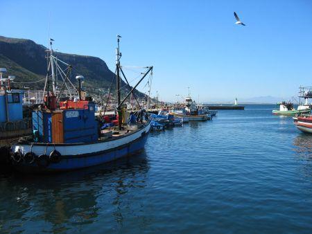 Cape Point Scheduled Tour: Half Day