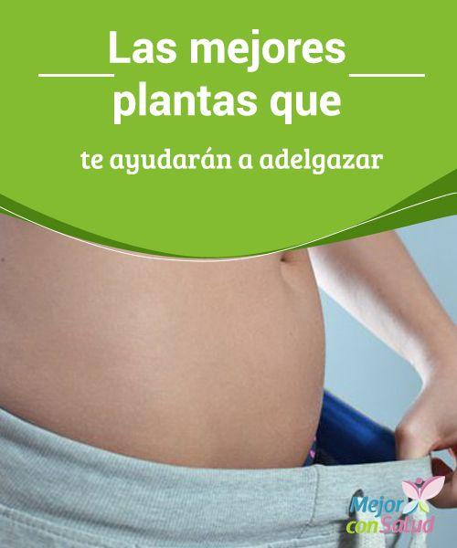 Las mejores plantas que te ayudarán a adelgazar Mantener el peso ideal en una preocupación constante para la mayoría de las personas. Existen miles de dietas, desde las más raras a las más conocidas,