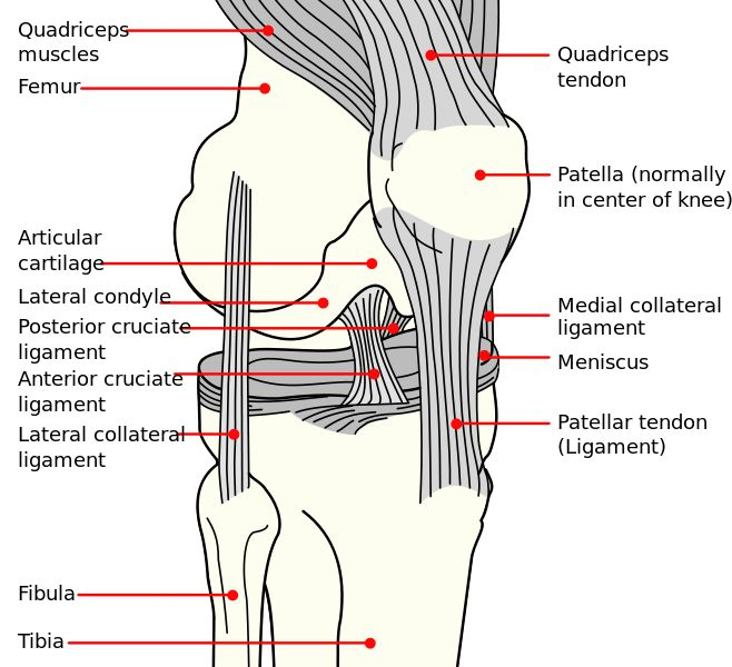 Knee Anatomy - Knee Pain - Runners Knee.  Exercises to help alleviate knee pain.