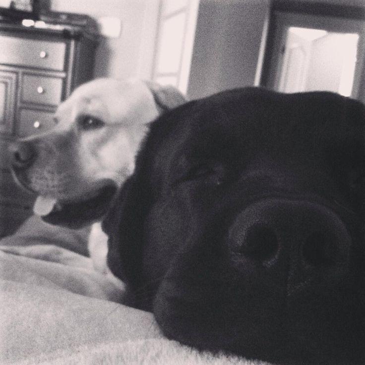 Carey Price's dogs :)