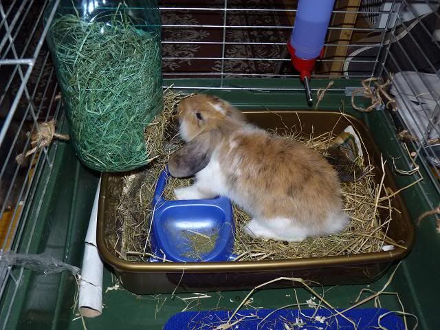 """Great idea to keep the hay in order. Really small cage though. """"DIY hay rack for rabbits from a plastic bottle"""""""