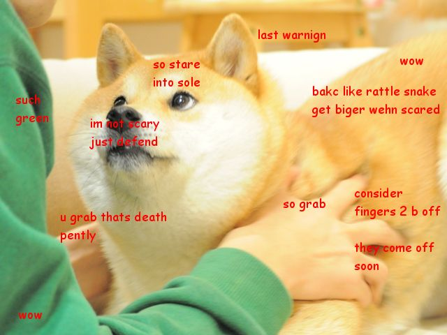 9f42ea8e7b2fa9646d531b19197c615e doge meme shiba 72 best such doge wow so much doge images on pinterest doge,So Much Wow Meme