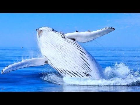 ▶ 5 World's Great Animal Migrations - YouTube Classical Conversations Cycle 2 Week 5