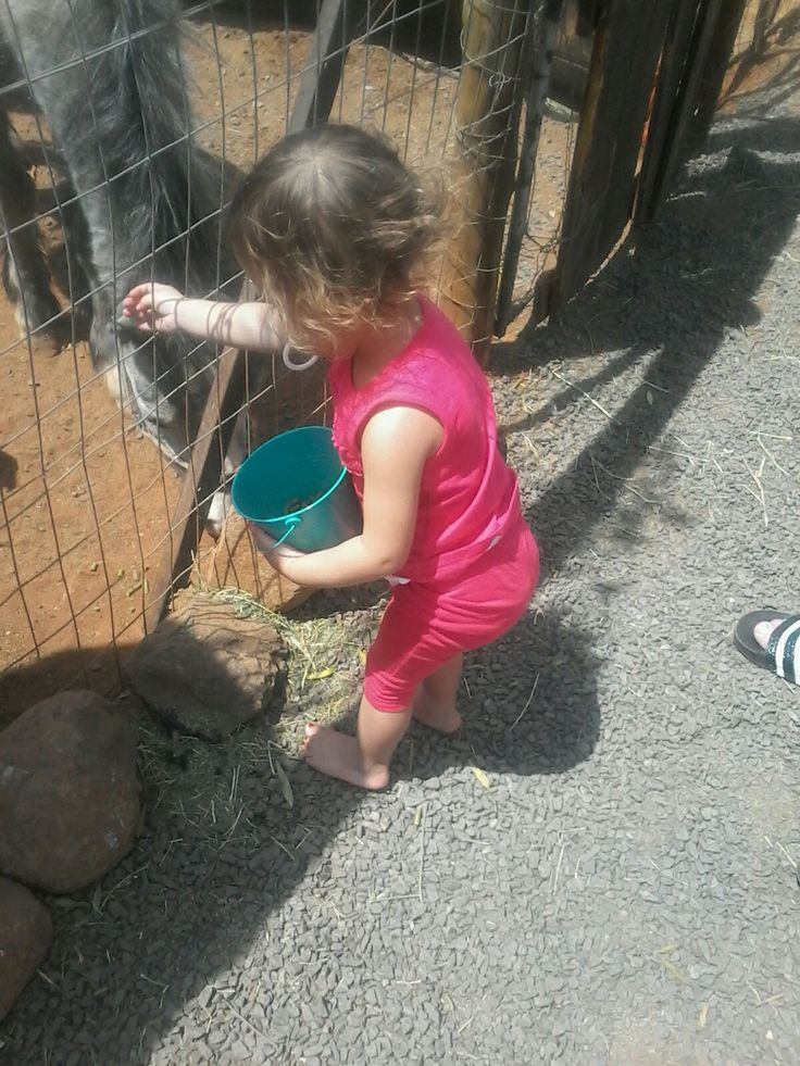 Zoey feeding the Animals