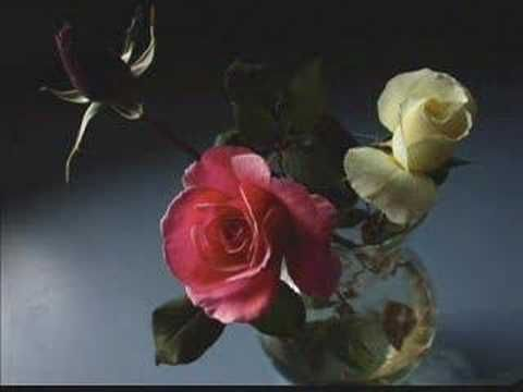 Enya - China Roses. 1995.  Music composed by Enya ,  Lyrics written by Roma Ryan.  Very Nice and Beautiful Songs Will Become Forever !  Thank You So Much !