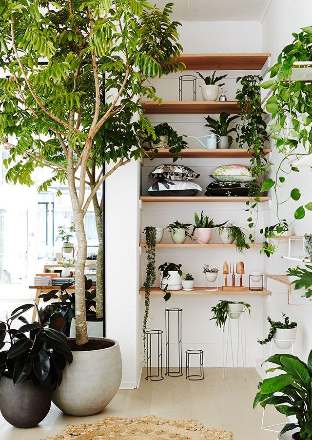 T.D.C: IVY MUSE Botanical Emporium Styling by Alana Langan - Hunt & Bow…