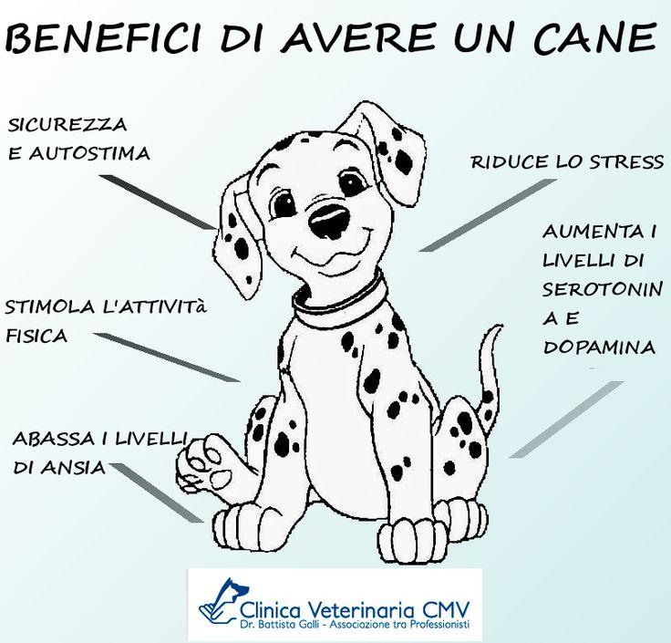 Benefici di avere un cane...
