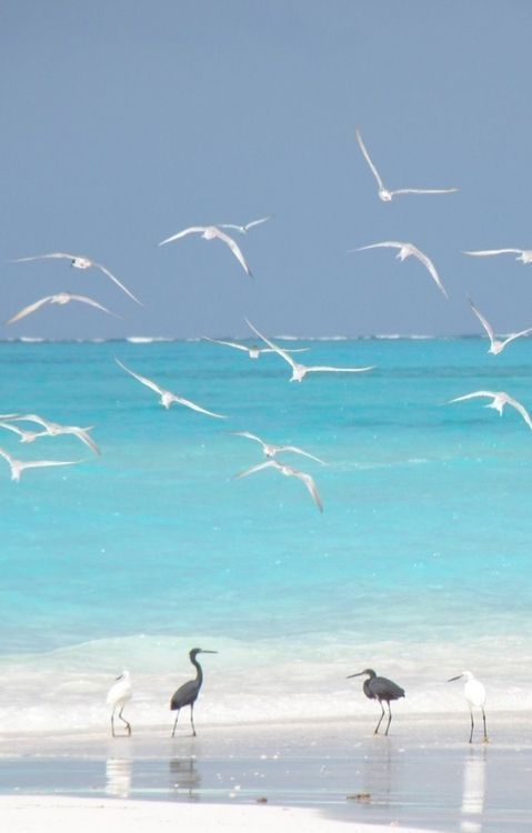 At the beach with the birds...heaven!