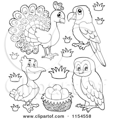 cartoon of an outlined peacock parrot pelican eggs and owl royalty free vector clipart by peacock nurseryfree coloring pagescoloring