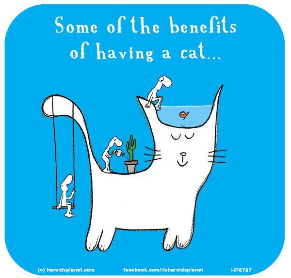 http://lastlemon.com/harolds-planet/hp5787/ Some of the benefits of having a cat...