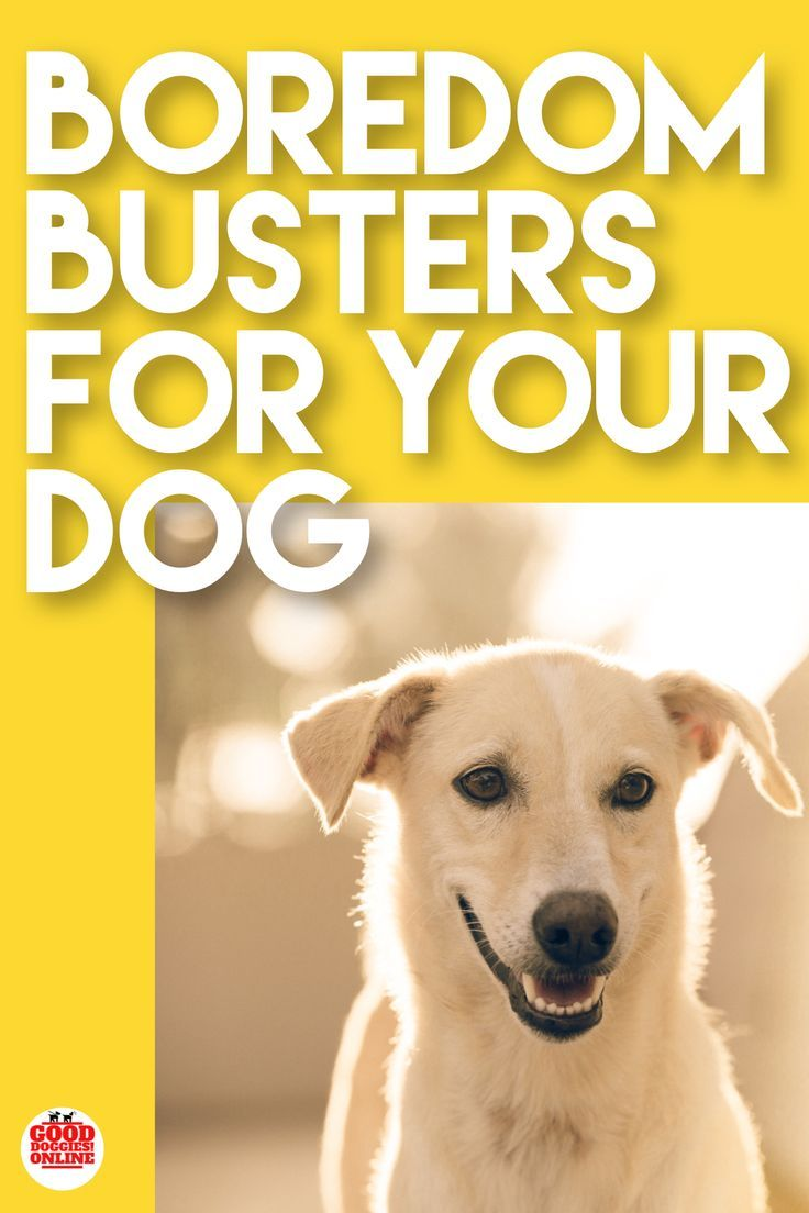 3 Quick Boredom Busters For Dogs Puppy Training Schedule