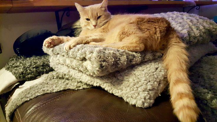 Pelusa vilar på täcket!
