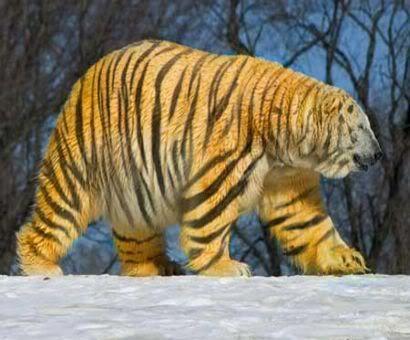 Image detail for -Photoshopped Animals