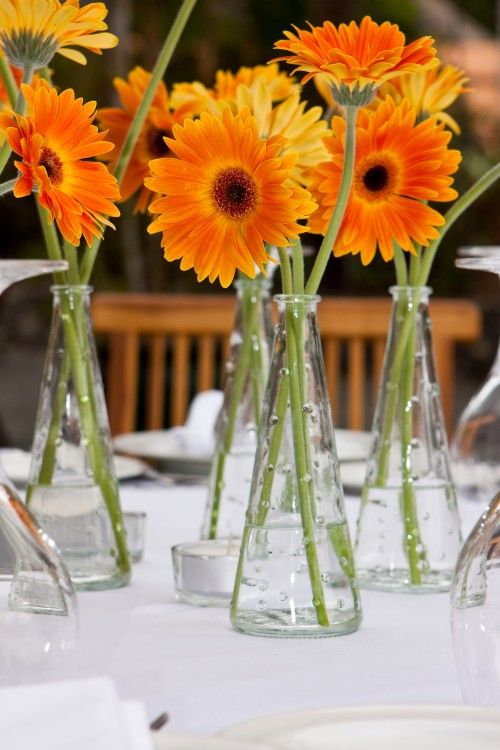 Sweet and simple vases with Gerbera Daisies add color and charm. Gerbera Daisies are available year-round at GrowersBox.com.: Vase, Gerber Daisies, Idea, Gerbera Daisies, Simple Centerpieces, Daisies Centerpieces, Orange Flowers, Diy Wedding, Diy Projects