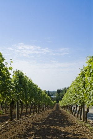 Winery Tour in Langley BC via the Langley Explorer.
