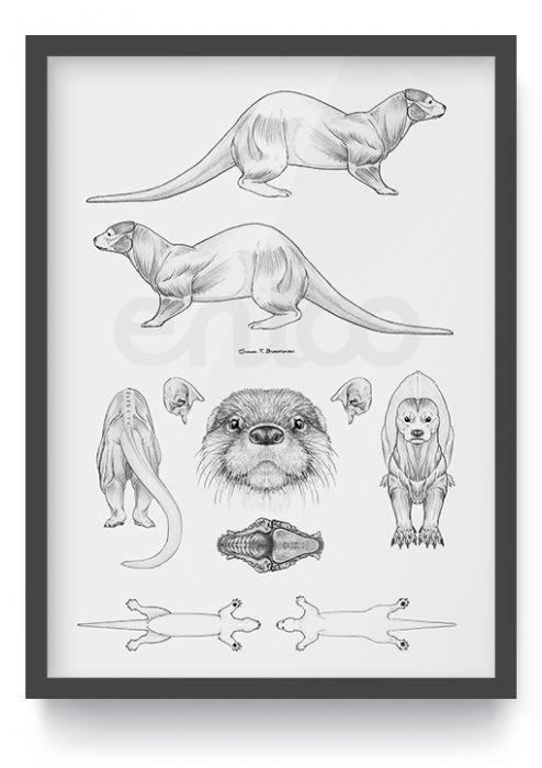 Poster Otter - correcte anatomie  afmeting: A2 – 594mm x 420mm materiaal: 135 g/m², semi-gloss opmerking:  niet ingelijst