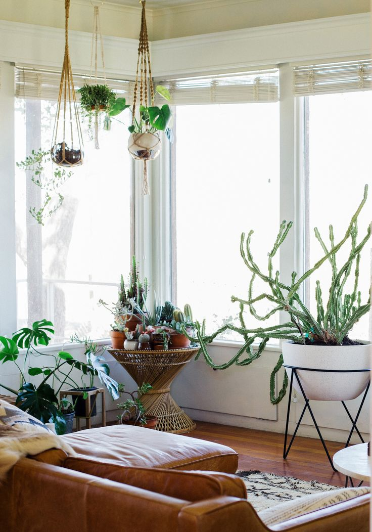 569 best images about plants indoor hanging diy pots - Picture hanging ideas for living room ...