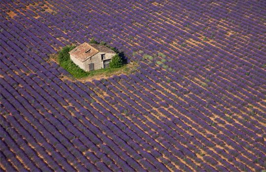Aerial view of stone barn in lavender field, Provence, France