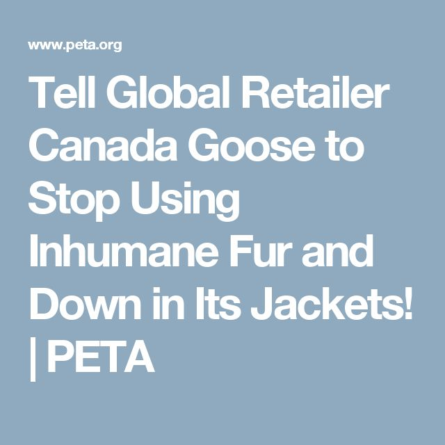 Tell Global Retailer Canada Goose to Stop Using Inhumane Fur and Down in Its Jackets! | PETA